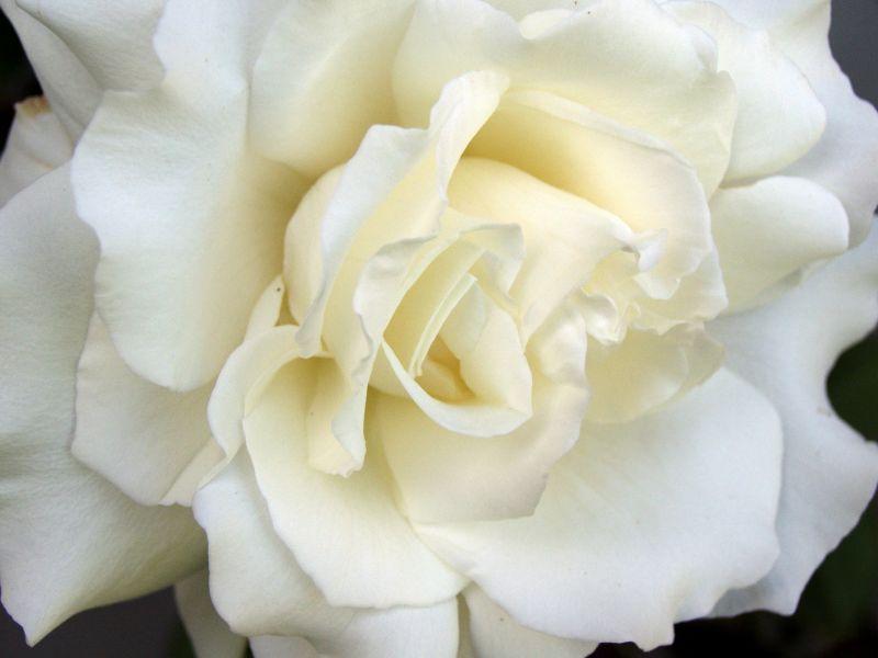 fleurs10.jpg