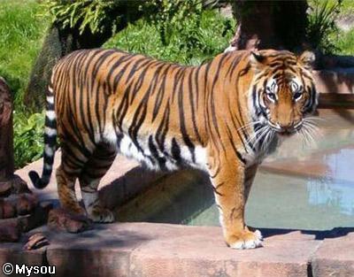 tigrutil1.jpg