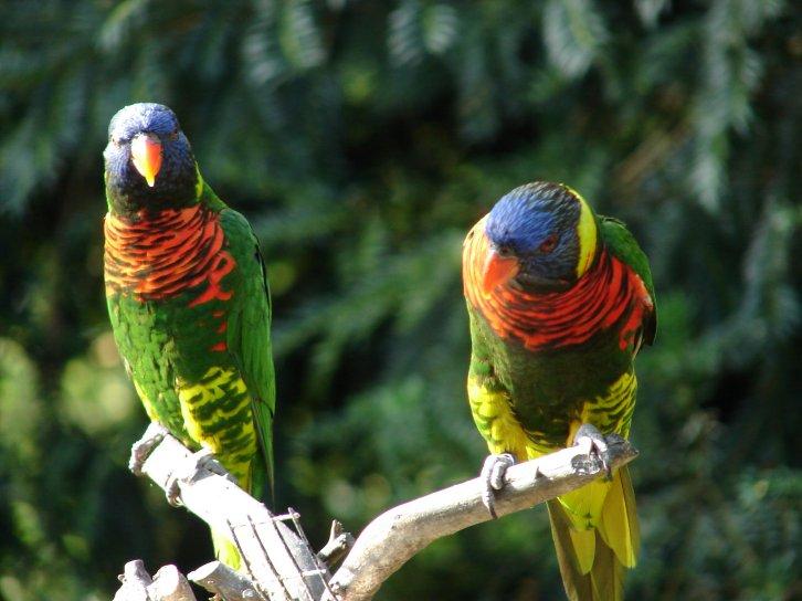 perroquets20011.jpg
