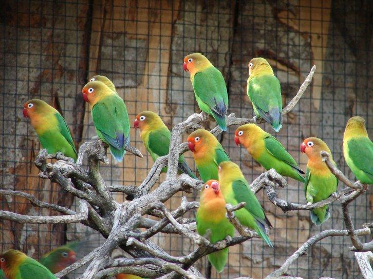 perroquets20271.jpg