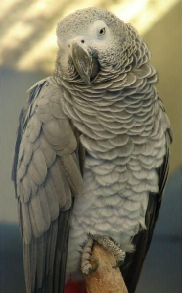 perroquets20441.jpg