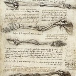 Studies_of_the_Arm_showing_the_Movements_made_by_the_Biceps[1]