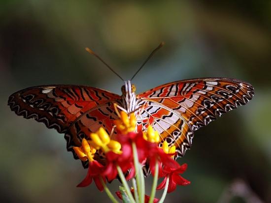 papillonsfrance113070381911067601.jpg