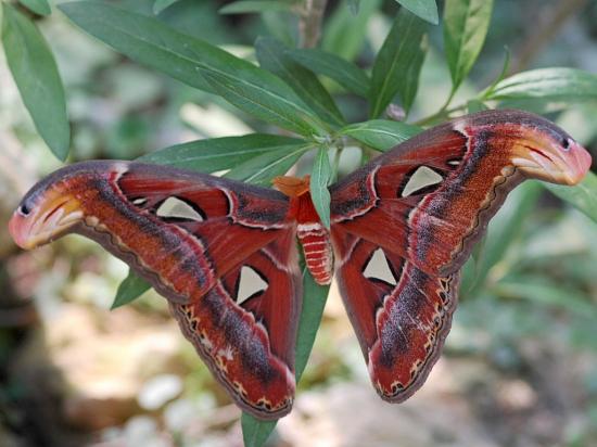 papillonsfrance124446564011067642.jpg