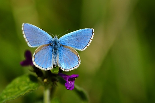 les papillons (photos) dans Les papillons(photos) papillon