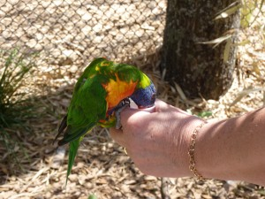 parc-oiseaux-2012-005-300x225