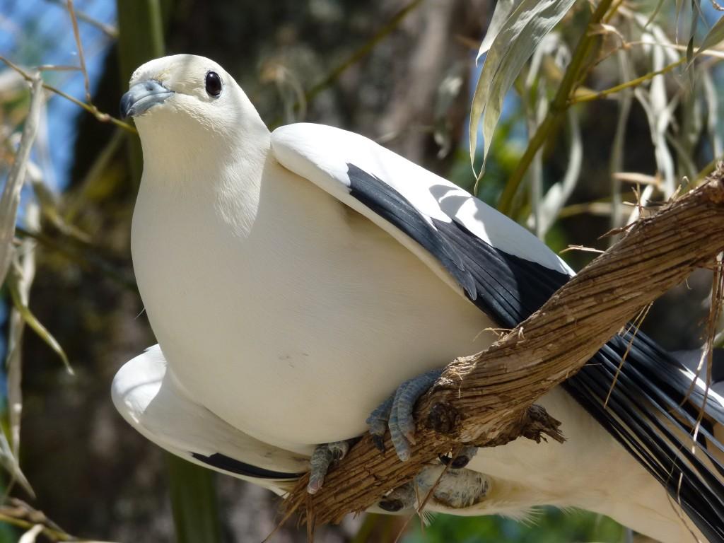 une journée aux parc des oiseaux(dombes) dans Les oiseaux III(photos) parc-oiseaux-2012-009-1024x768