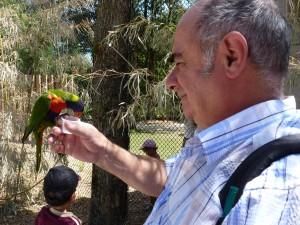 parc-oiseaux-2012-013-300x225 dombes dans Les oiseaux III(photos)