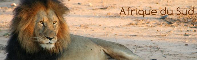 afrique-du-sud-lion[1]