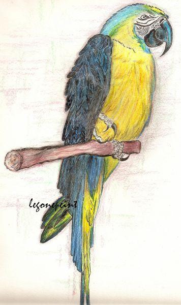 Pour dessiner un perroquet il faut un peu de tout du rire et du s rieux - Perroquet en dessin ...