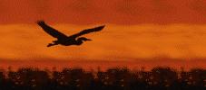 quelques oiseaux d'afrique du sud . dans les oiseaux d'afrique du sud 1