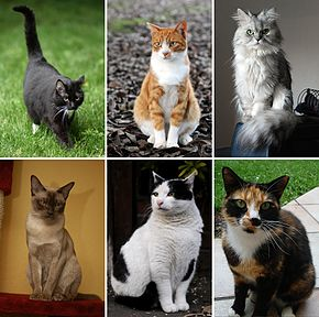 290px-Collage_of_Six_Cats-02[1]