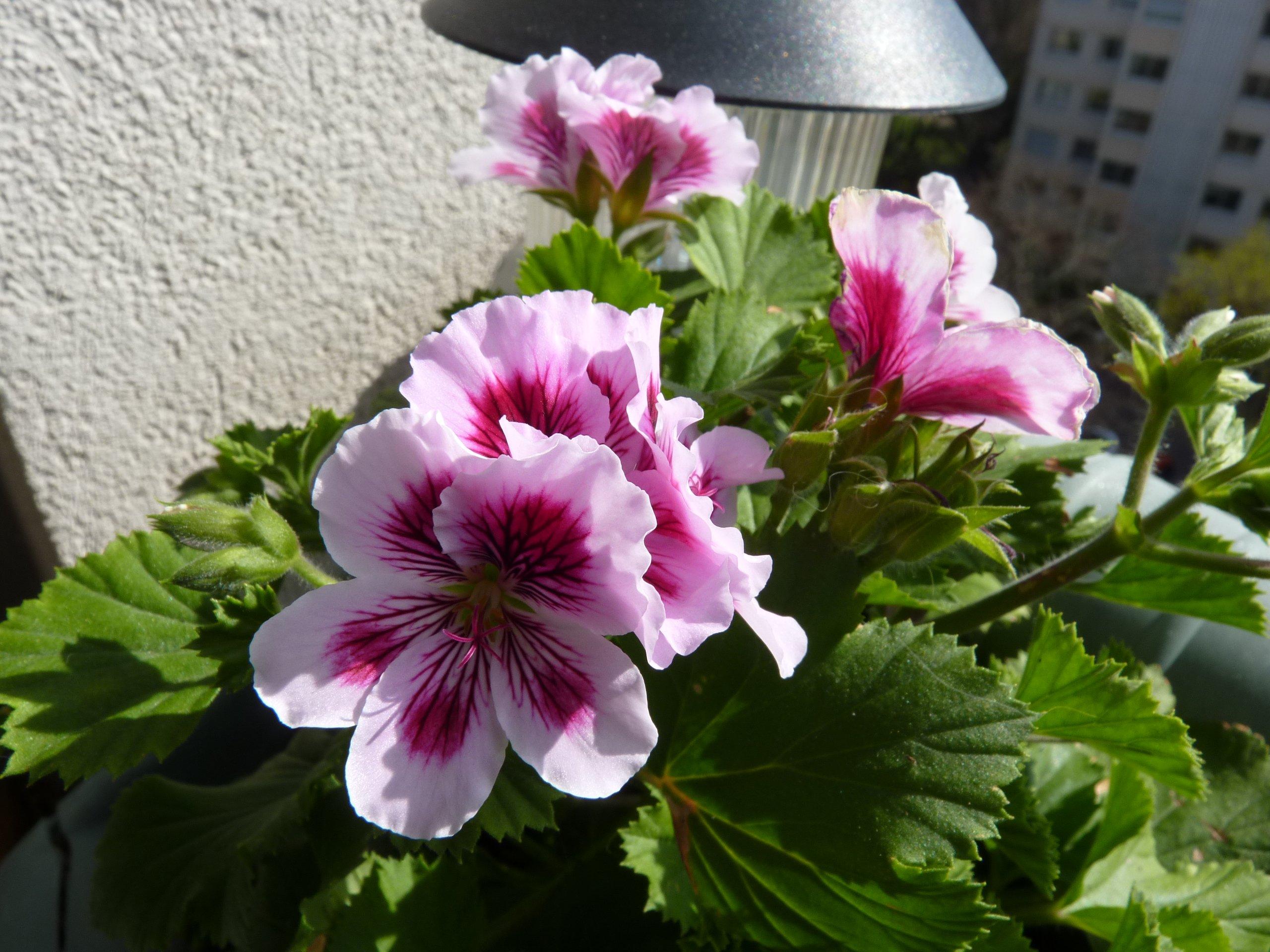 les plantes vertes en appartement balcon. · un peu de tout, du