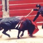 taureau_vs_matador[1]